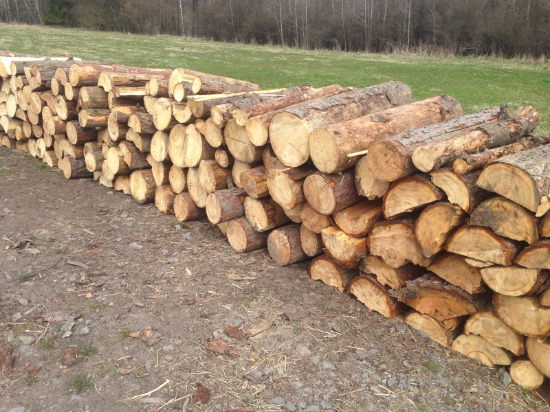 Palivové dřevo ostrava